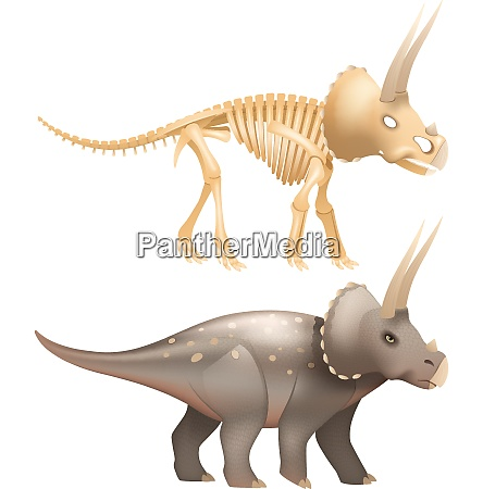 life triceratops dinosaur with skeleton in