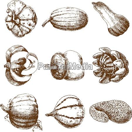 decorative unusual pumpkins varieties and winter