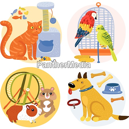 pets design concept including cat with