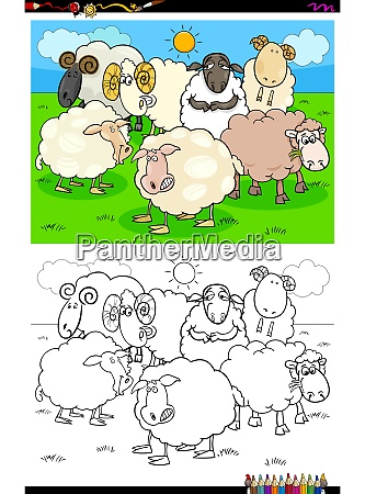 happy sheep characters group coloring book