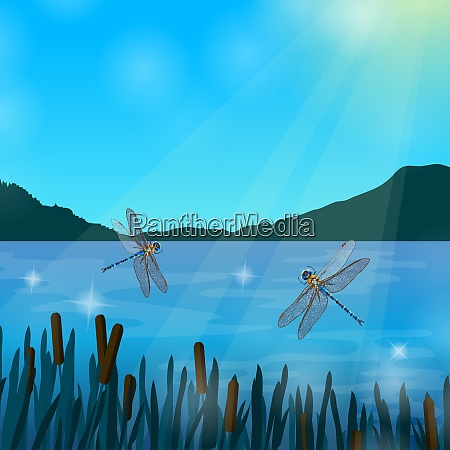 two dragonflies flying over water in