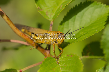 a close up of a grasshopper