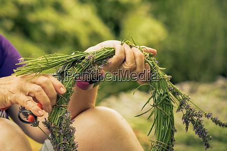 a bouquet of lavender lavender harvest