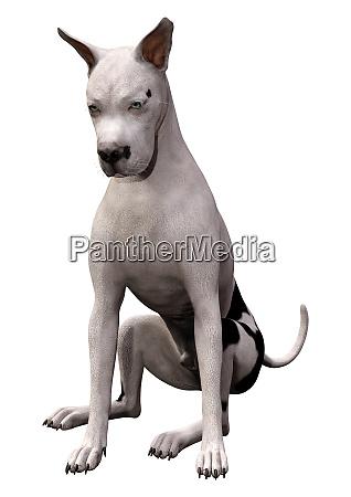 3d rendering grat dane dog on