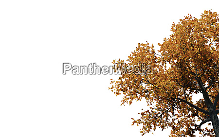 autumn treetop with white background