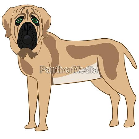 dog of the sort mastiff on