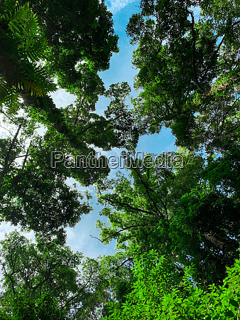 bottom view of green tree in