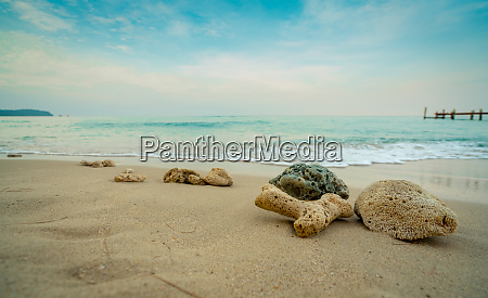 corals on sand beach by the