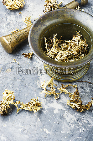 icelandic dry moss