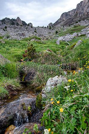 small stream in the mountain