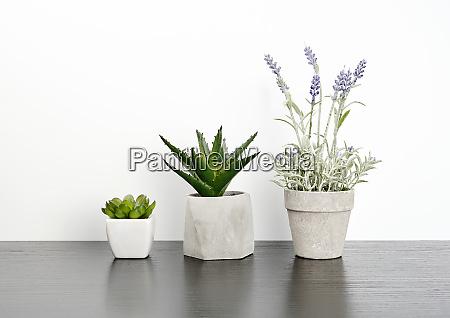 three ceramic pots with plants on