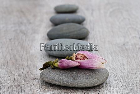magnolia flower bud and grey pebble