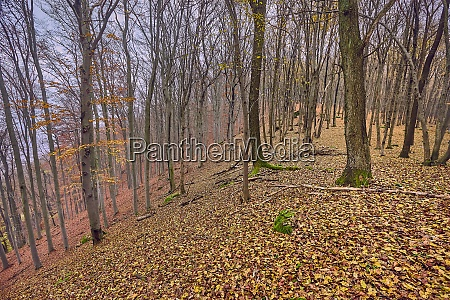 autumn mountain trail fallen leaves