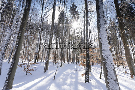 forest in winter swabian alb baden