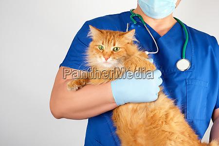 vet in a blue uniform holds