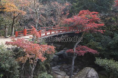 autumn colour miyajima hiroshima prefecture japan