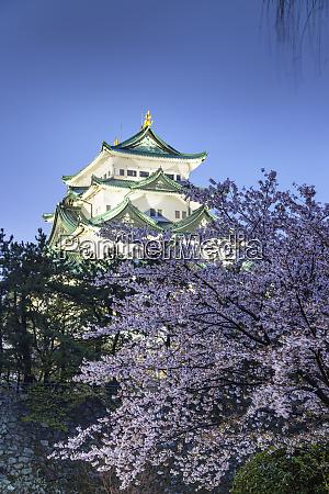cherry blossom at nagoya castle nagoya