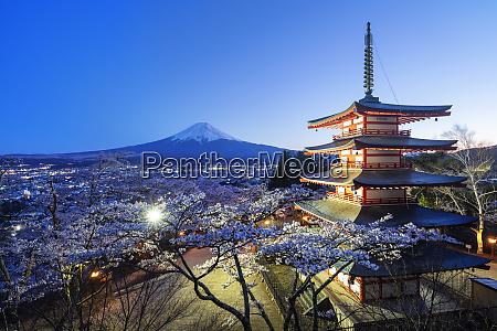 cherry blossom at chureito pagoda in