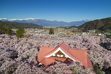 takato castle and cherry blossom takato