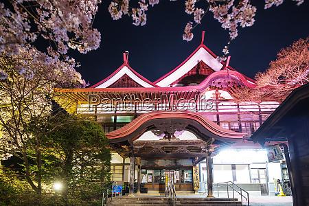 cherry blossom at takato castle takato