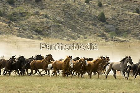 black hills wild horse sanctuary hot
