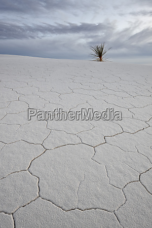 cracked sand dune with a yucca