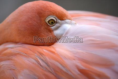 pink flamingo in curacao netherlands antilles