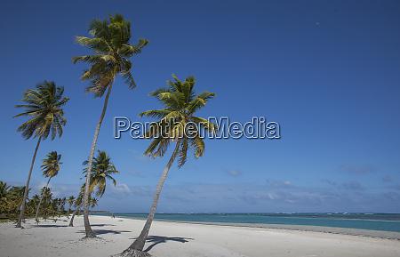 palm trees on beach in las