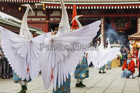 hakucho white swan white heron festival