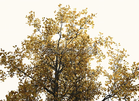 autumn tree treetop from the far