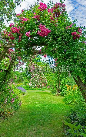 idyllic rose garden