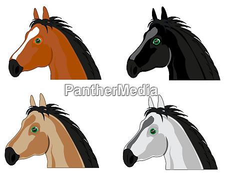 portrait pets varied colour of the