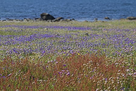 sea of flowers in the nature