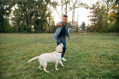 man throwing ball to dog labrador