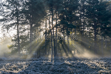 sunbeams shine through silhouetted trees to