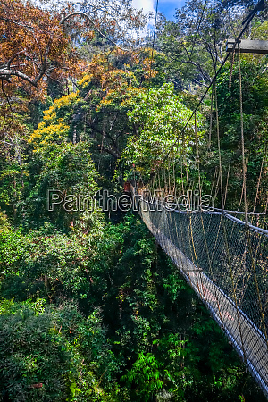 suspension bridge taman negara national park