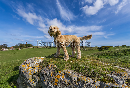 dog stands on grass field looking