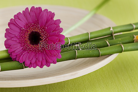 zen style flower still life with