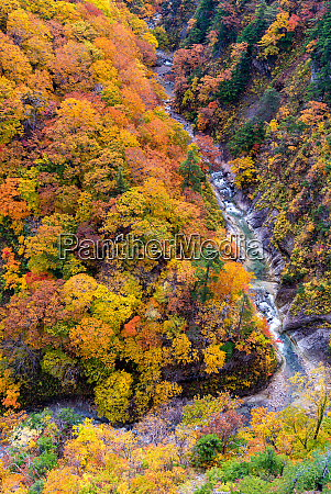 aerial view of autumn fall river