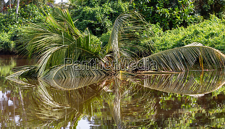 mirrored reflection of a tropical palm