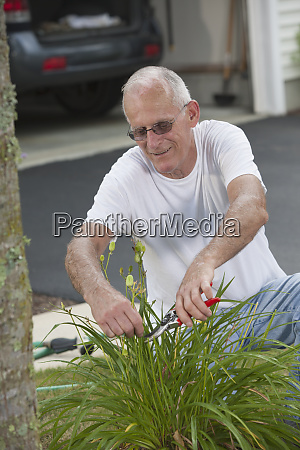 senior man clipping seed pods of
