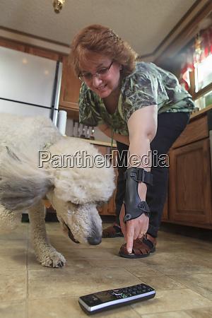 poodle service dog picking up a