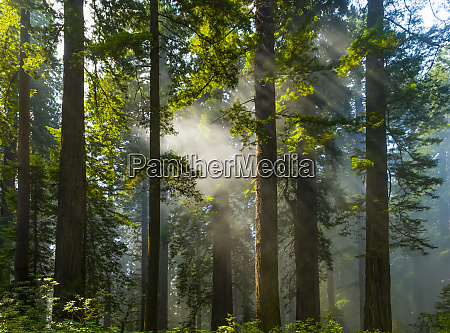 sun rays on the forest in