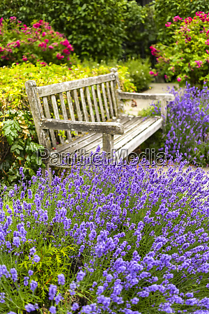 a wooden bench sits among blossoming