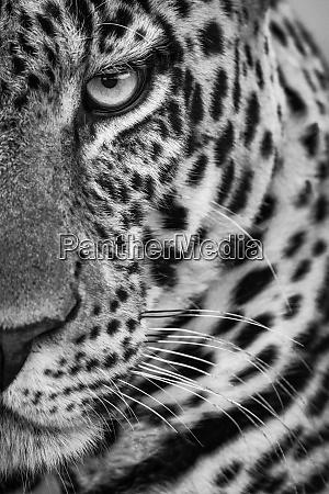 monochrome close up of half male