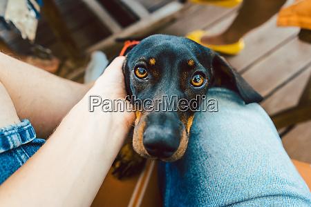 dog looking through lap of photographer