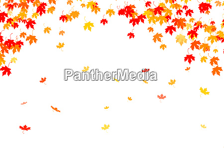 multi colored autumn leaves background