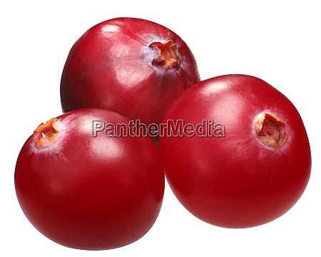 three cranberries v oxycoccs paths