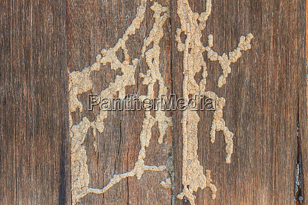 termites eat wood surface