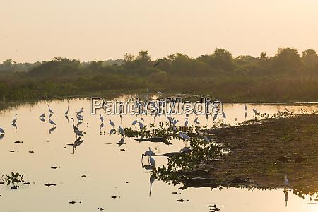 beautiful pantanal landscape south america brazil